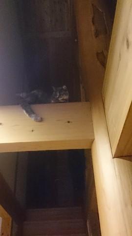 猫は高い所が好きです。 お前、どうやってそこに行ったの?