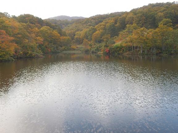 ため池の周辺 朝は特に美しい