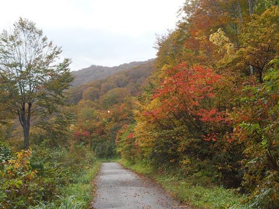 大厳寺高原奥の林道の一番奥ですが、紅葉の初期で赤い色が目立ってきました。