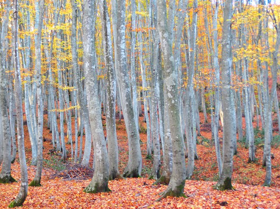 林の中まで紅葉が進んで綺麗でした。