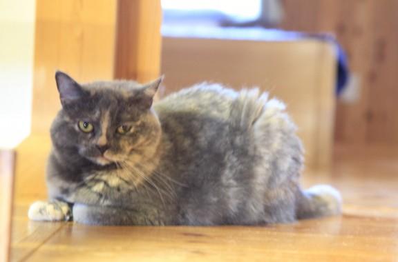 我が家の愛猫、人相?猫相は悪いですが可愛いです(笑)