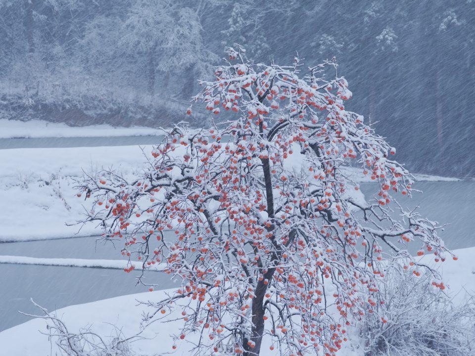 12/14に撮影した写真ですが、もう雪で行けません。